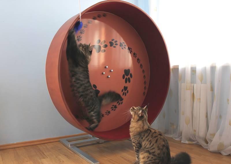 Беговое колесо для кота своими руками